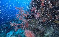 plongée indonésie